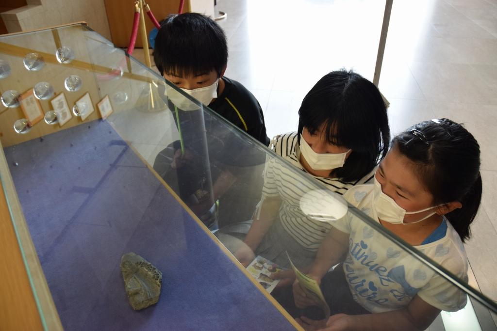 展示された化石