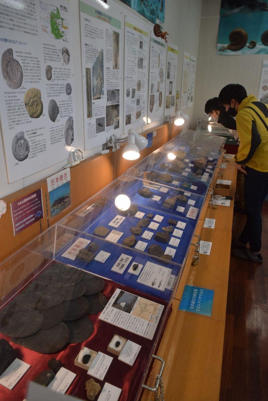 ウタツギョリュウなど貴重な化石を展示
