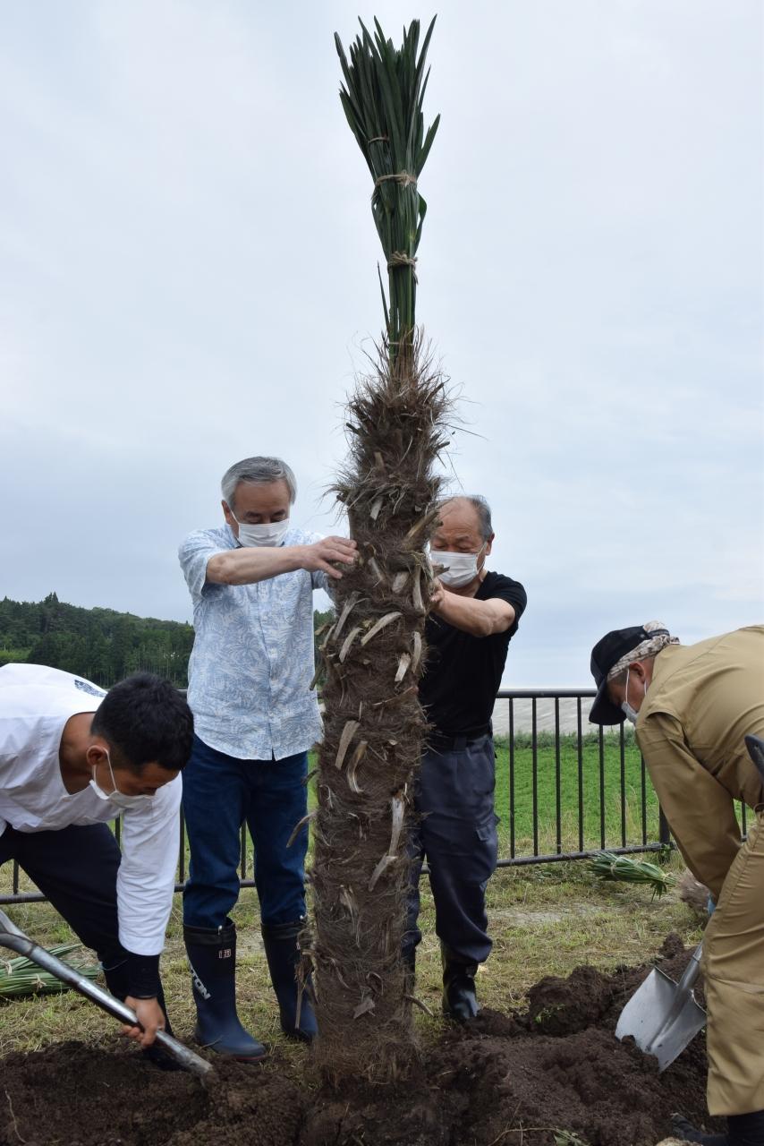 シュロを植える中舘会長(右)と菅原市長