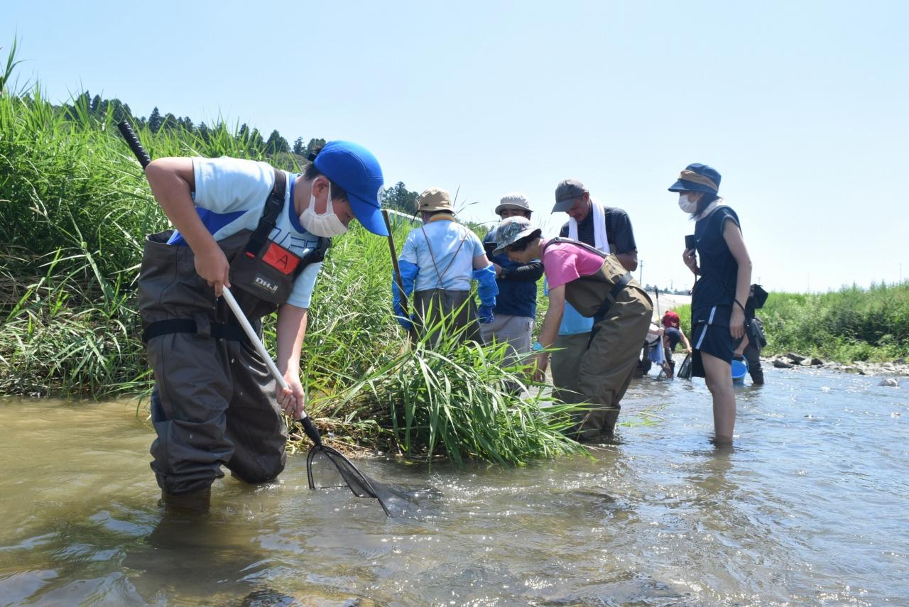 八幡川で生き物を調べる子供たち