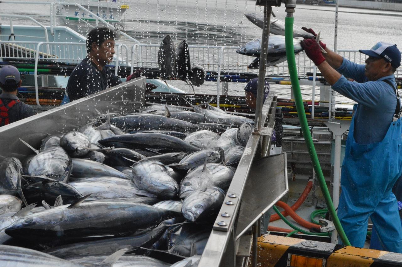 震災後最多となった一本釣りのカツオ