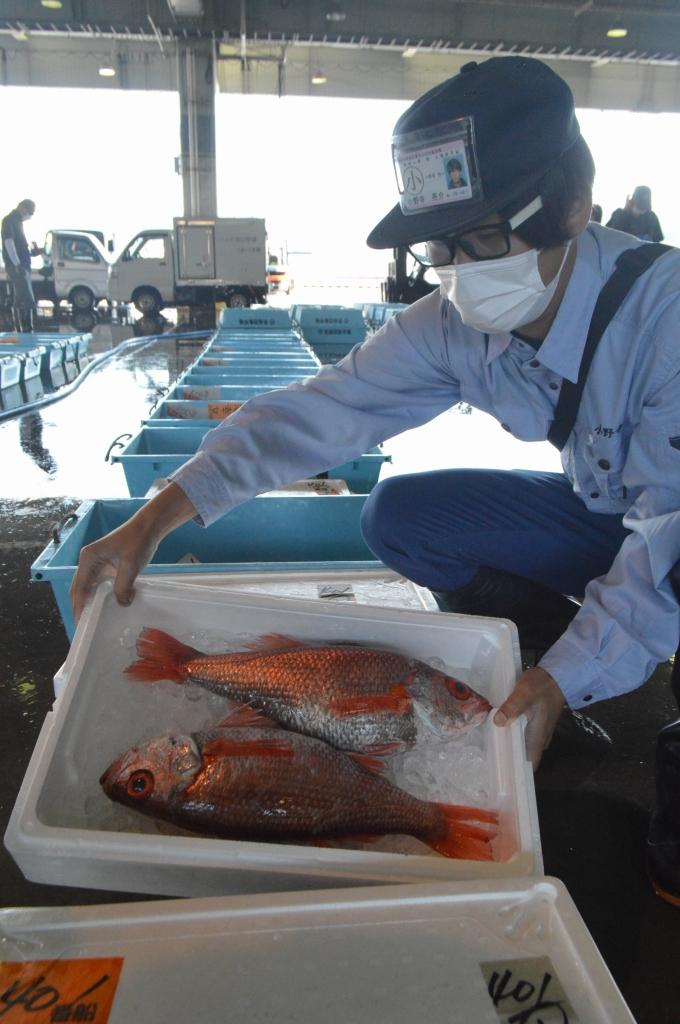 気仙沼魚市場に揚がったノドグロ