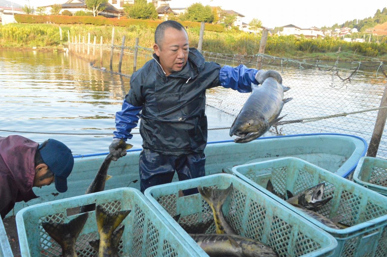 大川で始まったサケ漁
